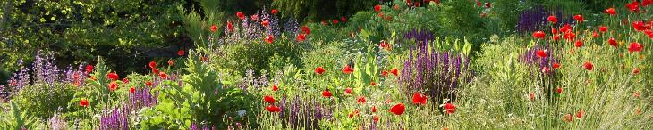 Gartenkalender Sommer