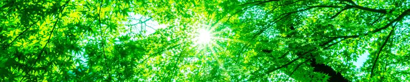 Lichtverhältnisse im Garten