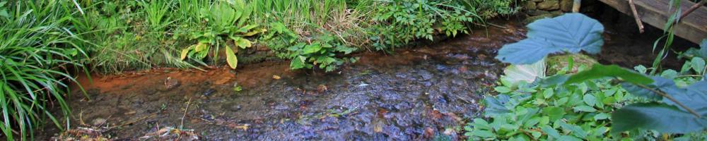 Teiche und Wasserläufe