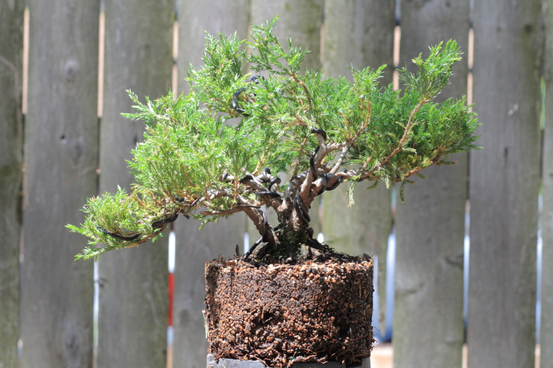 Bäume Umpflanzen bäume und sträucher umpflanzen die parzelle