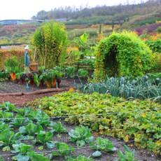 Fruchtwechsel für Gemüsebeete planen