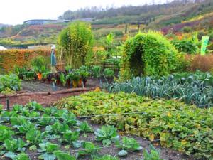 Fruchtwechsel im Gemüsegarten will geplant sein