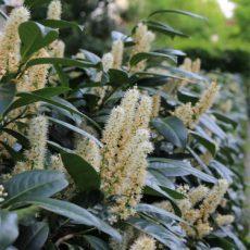 Pflanz-Zeit für frostempfindliche Gehölze